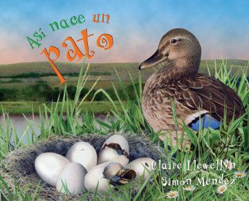 Cover Así nace… un pato