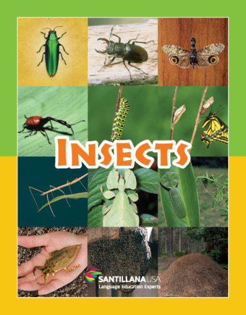 Cover Insects